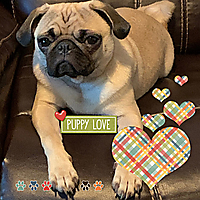 swd-cutout-hearts_capDogsLife.jpg