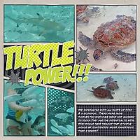 turtlepower_lilypad.jpg