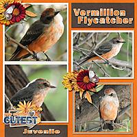 vermillion_flycatcher_2019_October.jpg
