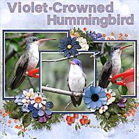 violet-crowned_hummingbird_small.jpg
