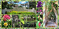 web_2017_Florida_August22_SelbyGardens2_SwL_BlockandPaperStrips_12x24_plain2.jpg