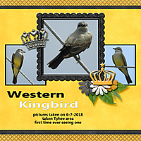 western_kingbird_England.jpg