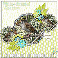 white-throated_sparrow_small.jpg