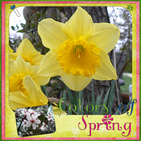 Colors-of-spring.jpg