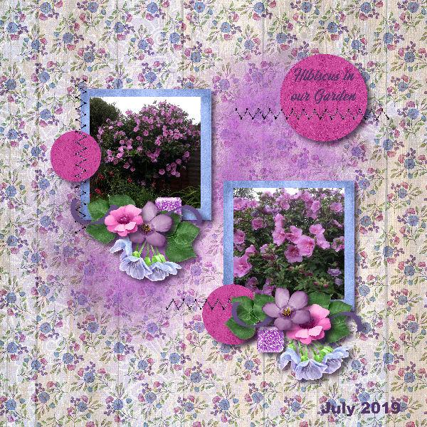 Hibiscus in our Garden