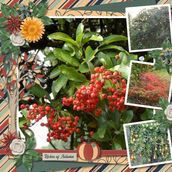 Riches of Autumn