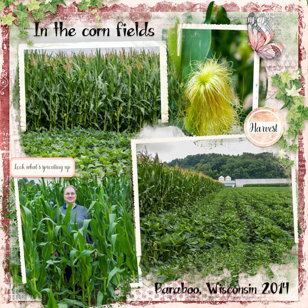 In The Cornfields