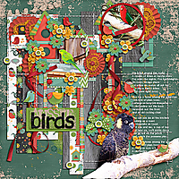 Aussie-Birds-tmBirdonit-tinci-PP.jpg