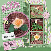 PeaceRose2014_Bloom_MagsGfx_600.jpg