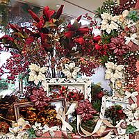 Winter-Flora-kkWB-lgfdTTape.jpg
