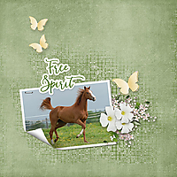 Free-Spirit5.jpg