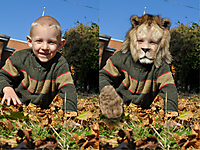 lion_sideBySide.jpg