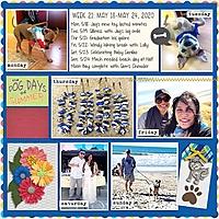 Week_21_May_18-_May_24.jpg