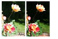Week-1-Photo-Editing.jpg