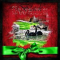 swans_web.jpg