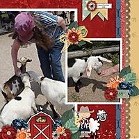 County_Fair_Farm_shepherdstudio_pumpkin_spic.jpg