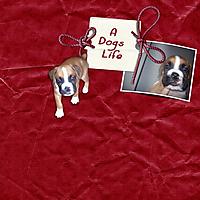 Dog-Days.jpg