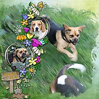 doggies_copy.jpg