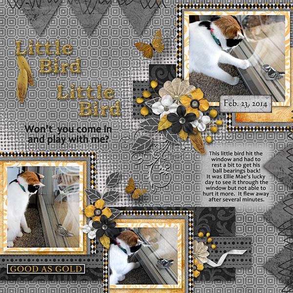 Little Bird Little Bird