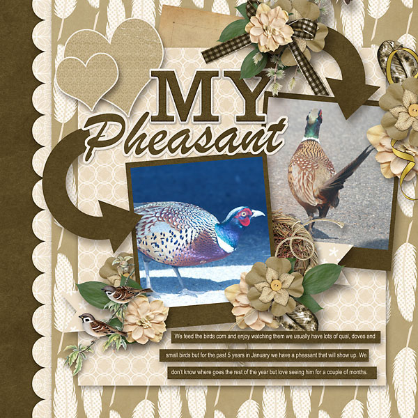 My-Pheasant