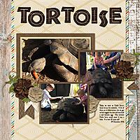 2016_12_29-TB-Tortoise.jpg