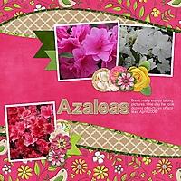 Azaleas2.jpg