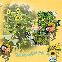 Beautiful_Life_blend_4_.jpg