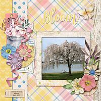 Bloom20.jpg