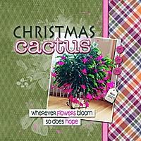 Christmas_Cactus_med_-_1.jpg