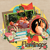 Flamingos1.jpg