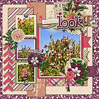 Look_Up1.jpg