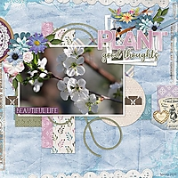 Plant-sm.jpg