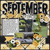 September_Gold_Finch_2.jpg