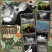 Wild_Life.jpg