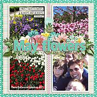 mayflowersWEB2.jpg