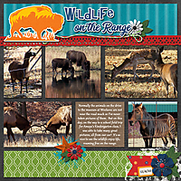 wildlife-on-the-range.jpg