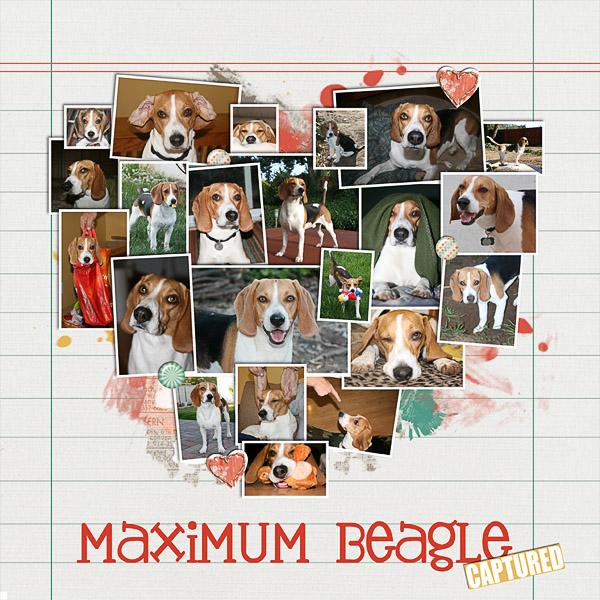 Maximum Beagle