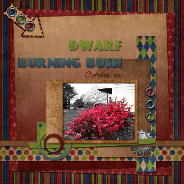 Dwarf Burning Bush
