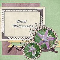 insp_designs_this_is_my_life_milkweed_-_Page_021.jpg