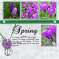 SpringCrocus.jpg