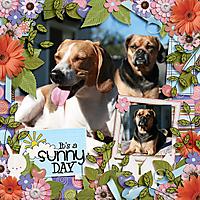 sunny_day_copy.jpg
