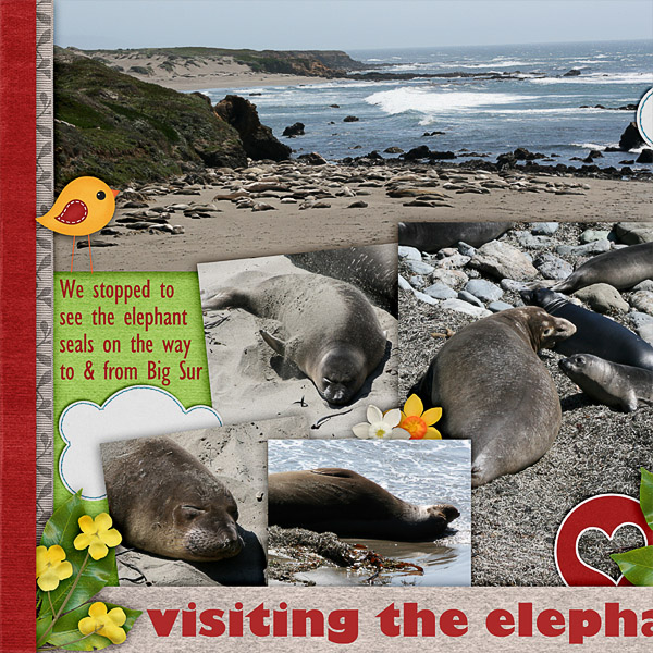 Elephant Seals (left)