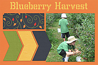 BlueberryHarvest.jpg