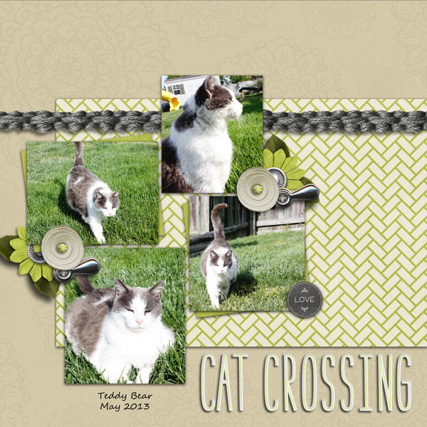 catcrossing