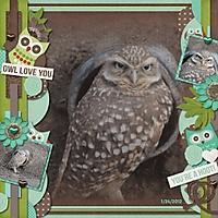 burrowing_owl_550x550_.jpg