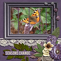 butterfly6.jpg