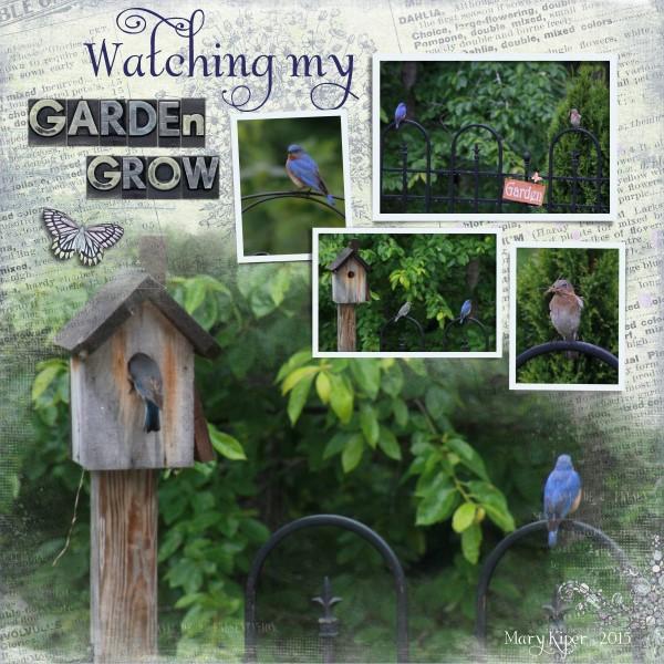 Watching My Garden Grow