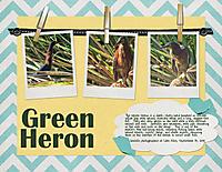 Green-Heron.jpg