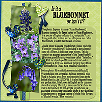 Is-it-a-bluebonnet-or-isn_t-it.jpg