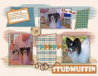 Studmuffin2.jpg